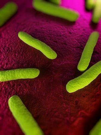 Escherichia coli bacteria,computer artwork