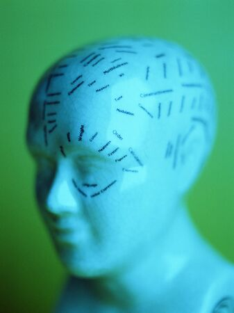 pseudoscience: Phrenology model LANG_EVOIMAGES