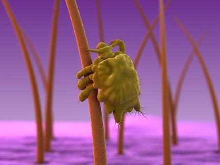 pubis: Pubic louse (Phthirus pubis),computer artwork