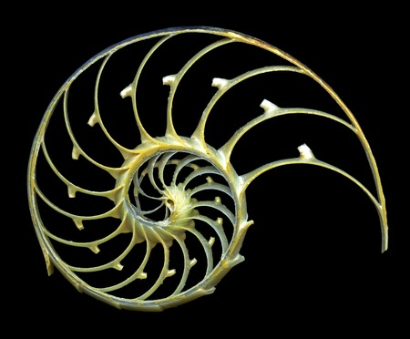 indo: Nautilus shell.Close-up of a sectioned shell of a nautilus (Nautilus pompilius),showing the spiral structure and chambers of mother-of-pearl (nacreous).The nautilus is a marine cephalopod related to the squid,which inhabits the Indo- Pacific region LANG_EVOIMAGES