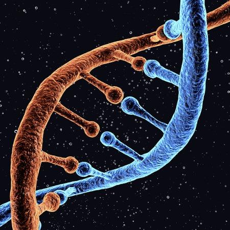 DNA molecule,artwork LANG_EVOIMAGES