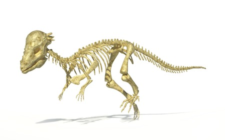 Pachycephalosaurus dinosaur skeleton,computer artwork.This dinosaur lived in the USA during the Maastrichtian stage of the late cretaceous period