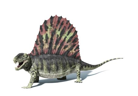 long lived: Dimetrodon,computer artwork.Dimetrodon were the dominant land predators that lived around 270 million years ago,during the Early Permian Period,and long before the dinosaurs.They were more closely related to mammals than reptiles LANG_EVOIMAGES