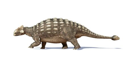 full length herbivore: Ankylosaur,computer artwork.This heavily-armoured dinosaur lived in the early Mesozoic era,in the Jurassic and Cretaceous periods,between about 125 and 65 million years ago.It was a herbivorous dinosaur,and the spiked armour served as protection against c