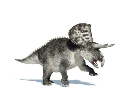 full length herbivore: Zuniceratops dinosaur,computer artwork.This dinosaur lived approximately 90 million years ago during the Turonian age of the Late Cretaceous period LANG_EVOIMAGES