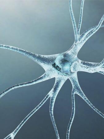 cns: Nerve cell,artwork LANG_EVOIMAGES