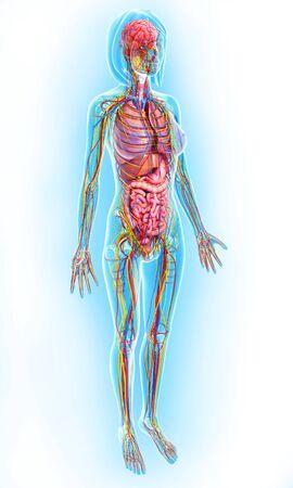 intestino grueso: anatomía femenina, obras de arte