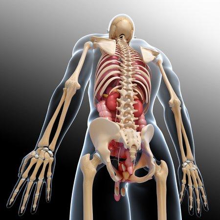 pene: Anatomía masculina, obras de arte