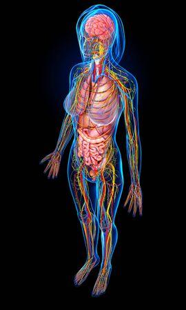 cerebrum: Female anatomy,artwork
