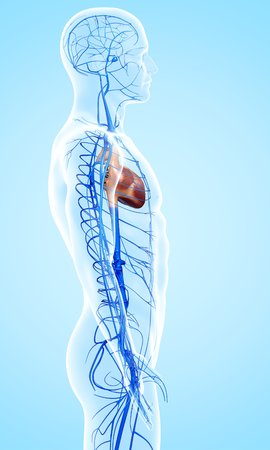 cava: Human veins,artwork