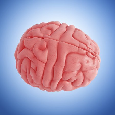 cerebrum: Human brain,artwork