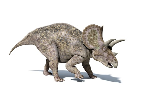 Triceratops dinosaur,computer artwork.This herbivorous dinosaur lived during the Cretaceous period