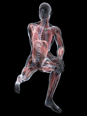Male musculature,artwork