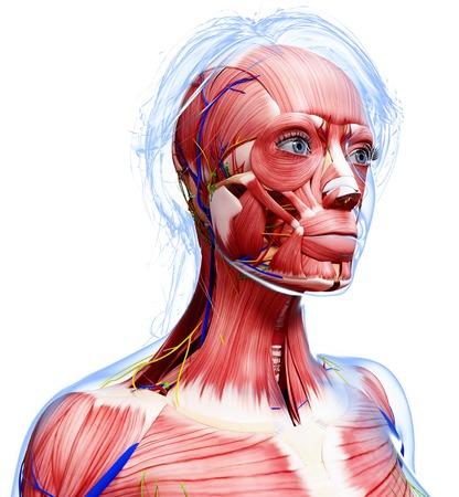 female likeness: Female anatomy,computer artwork LANG_EVOIMAGES