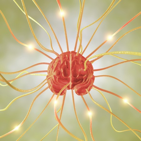 Central nervous system,conceptual computer artwork LANG_EVOIMAGES