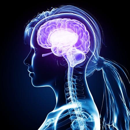 Female brain,computer artwork