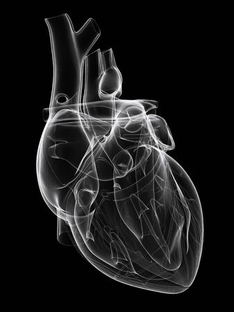 Healthy heart,computer artwork LANG_EVOIMAGES