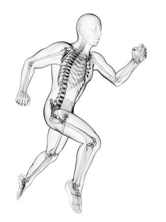Running skeleton,computer artwork LANG_EVOIMAGES