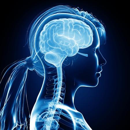 human likeness: Female brain,computer artwork