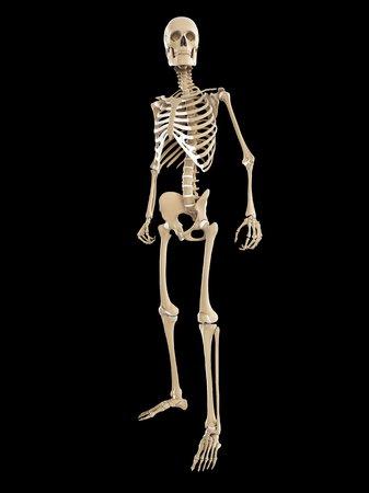 Skeleton,computer artwork LANG_EVOIMAGES