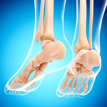 Human foot bones,artwork