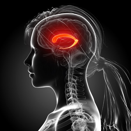thalamus: Female brain,artwork