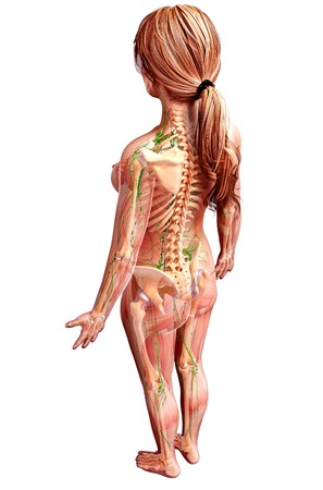 Female lymphatic system,computer artwork