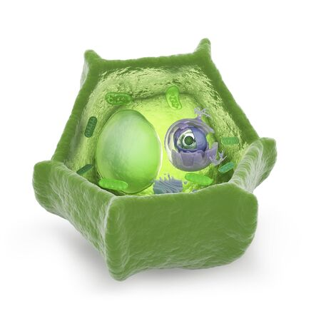 Plant cell,computer artwork