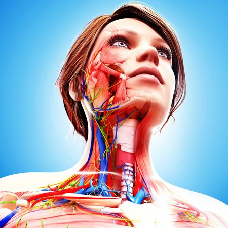 human likeness: Female anatomy,artwork