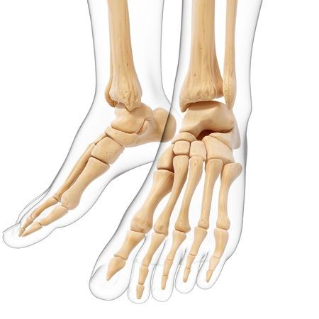 human likeness: Human foot bones,artwork