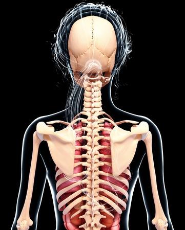anatomía femenina, obras de arte
