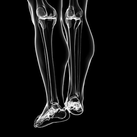 Human Leg Bones,artwork Stock Photo, Picture And Royalty Free Image ...