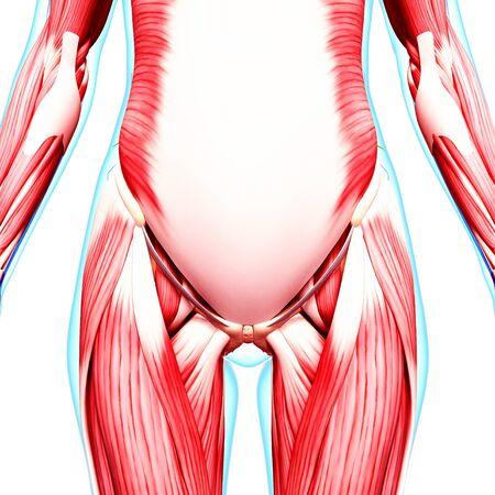 human likeness: Human musculature,computer artwork