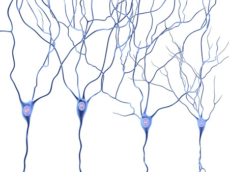Nerve Cells,artwork Stock Photo, Picture And Royalty Free Image ...