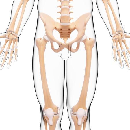 human likeness: Human skeleton,artwork