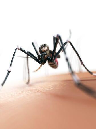 entomological: Mosquito on skin,artwork