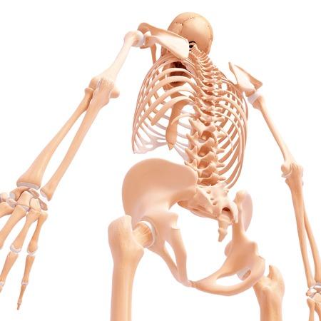Human skeleton,artwork