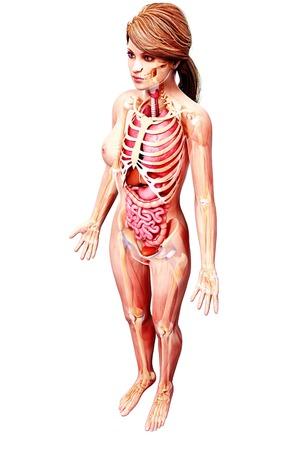 Female Anatomyartwork Stock Photo Picture And Royalty Free Image