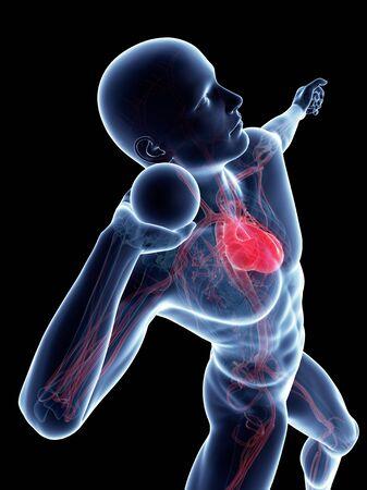 Male cardiovascular system, artwork LANG_EVOIMAGES