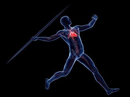 lanzamiento de jabalina: Male cardiovascular system, artwork LANG_EVOIMAGES
