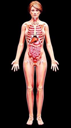 female likeness: Female anatomy,artwork