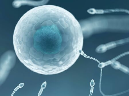 Egg and sperm,artwork LANG_EVOIMAGES