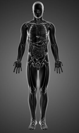 ribcage: Male anatomy,artwork