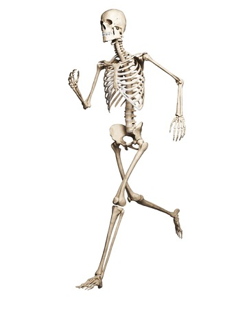 Running skeleton,artwork LANG_EVOIMAGES