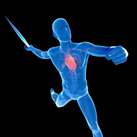 lanzamiento de jabalina: Sistema cardiovascular masculino, ilustraciones LANG_EVOIMAGES