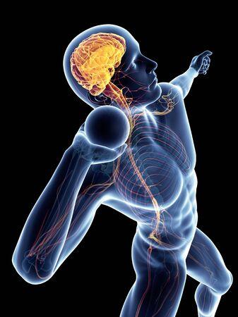 Sistema nervioso masculino, obras de arte