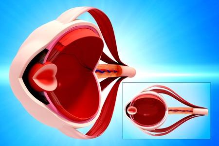 Human eye anatomy,artwork LANG_EVOIMAGES