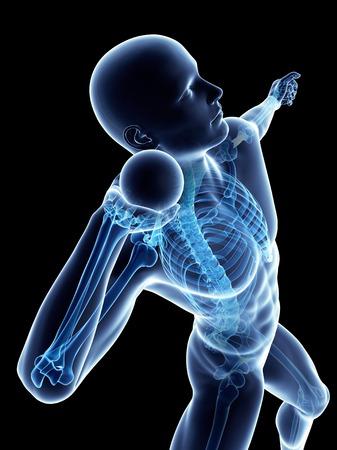 Esqueleto masculino, ilustraciones LANG_EVOIMAGES