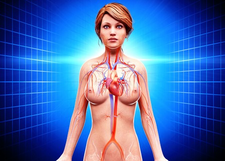 female likeness: Female cardiovascular system,artwork