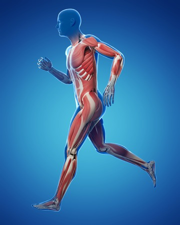 Runner muscles,artwork LANG_EVOIMAGES